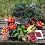 Home grown produce at plot to Pot